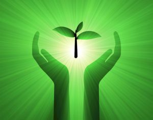 hands_holding_sprout_beaming_dreamstime_xxl_6270400_cr_600